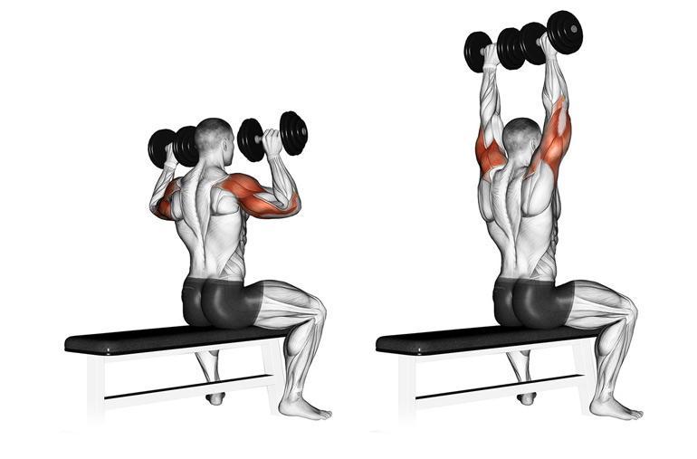 Упражнения на переднюю дельту плеча. лучшие упражнения на плечи для девушек с гантелями