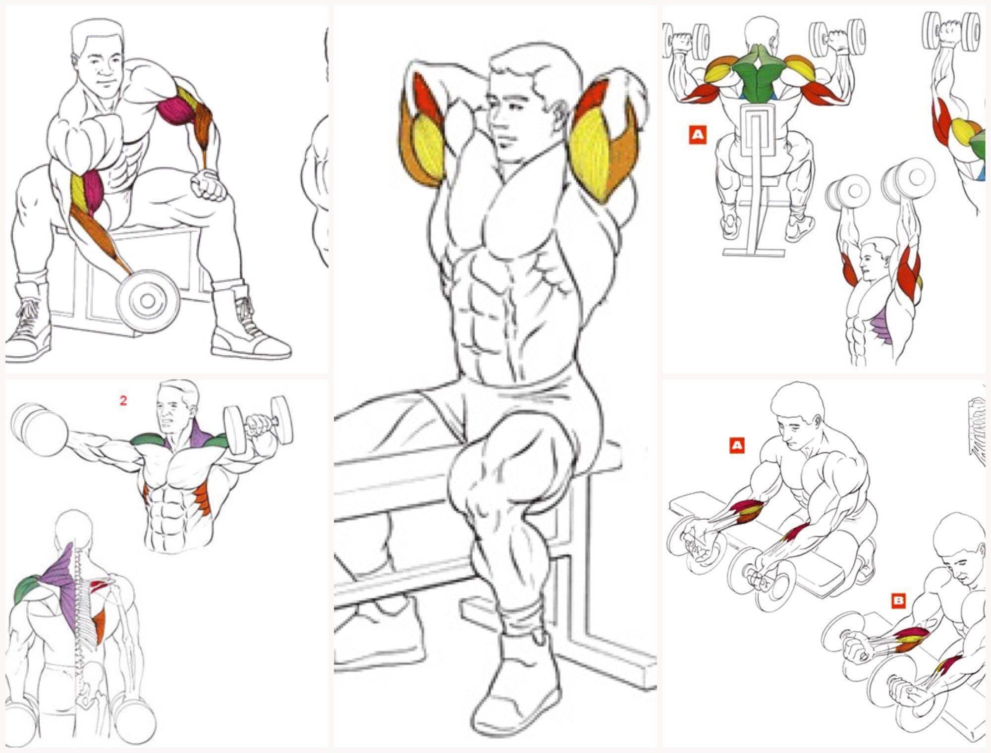 Упражнения на плечи в тренажерном зале для мужчин
