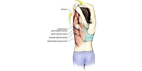 Растяжка мышц рук