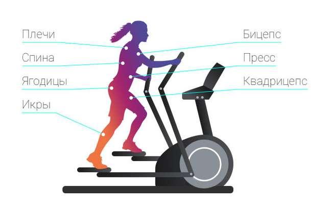 Степпер: польза для ног, как выполнять упражнения для похудения, топ лучших тренажеров