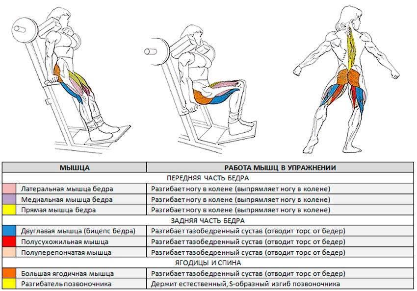 По ступенькам к стройной фигуре: ходьба по лестнице для похудения — упражнения, тренировки, отзывы и результаты