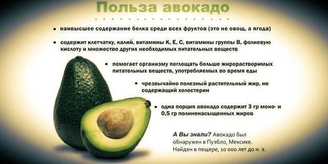Полезные свойства авокадо - домашний авокадо