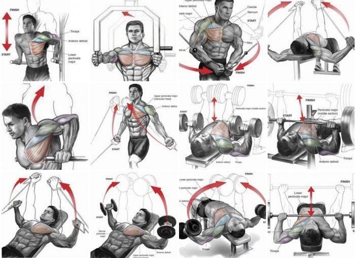 Тренировка грудных мышц в тренажерном зале