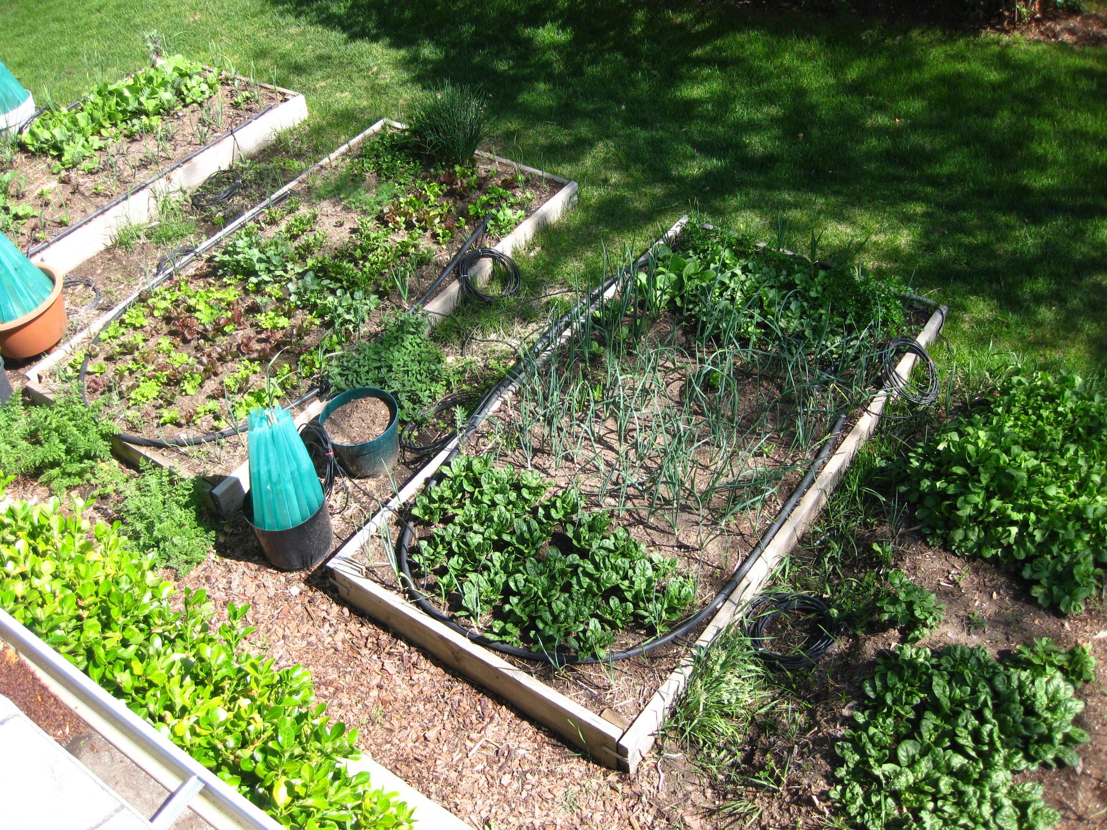Лентяйный огород. секреты сибмам