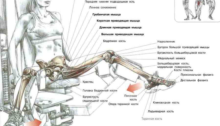 Сведение ног в тренажере: техника выполнения, какие мышцы работают, фото