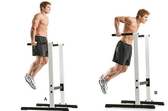 Какие мышцы работают при отжиманиях на брусьях: схема и рекомендации