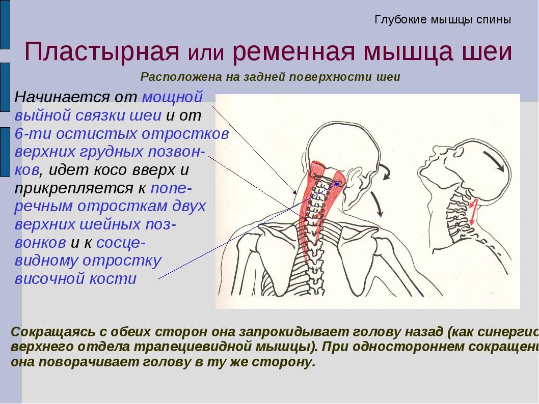 Болит голова и сзади шея: причины, диагностика и методы лечения - sammedic.ru
