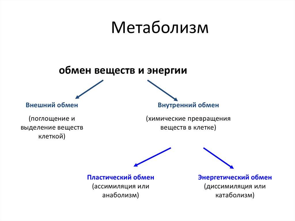 Основной обмен (базовый метаболизм)- способы и формулы расчета