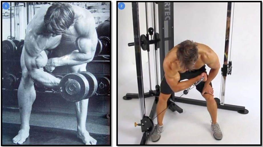 Лучшие упражнения на бицепс: топ-20 самых эффективных упражнения для тренировки двуглавой мышцы плеча