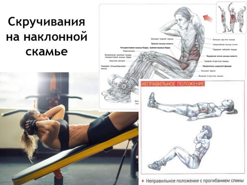 Скручивания на наклонной скамье: техника выполнения, какие мышцы работают