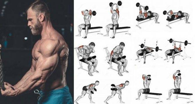 Эффективные базовые упражнения на бицепс в тренажерном зале