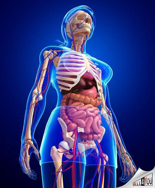 Как работает пищеварительный тракт, и как осуществляется пищеварение?