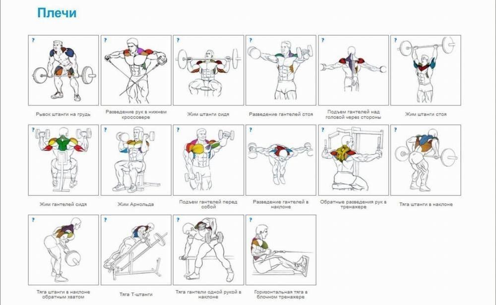 Как накачать плечи: 4 программы тренировок - dailyfit