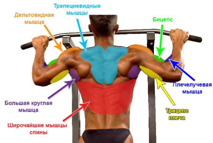 Как накачать мышцы в домашних условиях: упражнения, программы