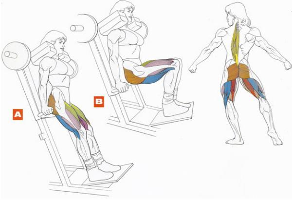 Как накачать квадрицепс: лучшие упражнения