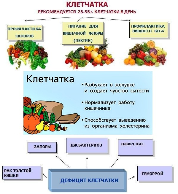 Клетчатка и ее роль в питании, продукты богатые клетчаткой