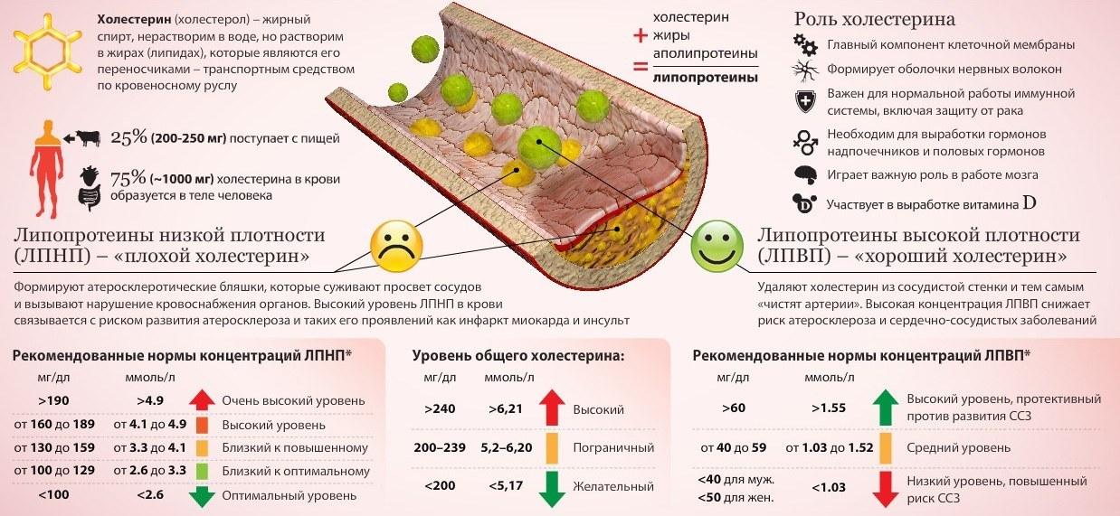 Продукты понижающие холестерин в крови быстро и эффективно
