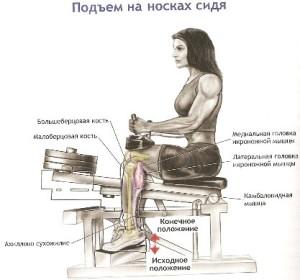 Подъем на носки из положения сидя