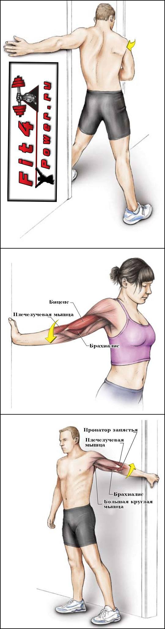 Упражнения для красивых рук для женщин- тренировки бицепса, плеч и трицепса
