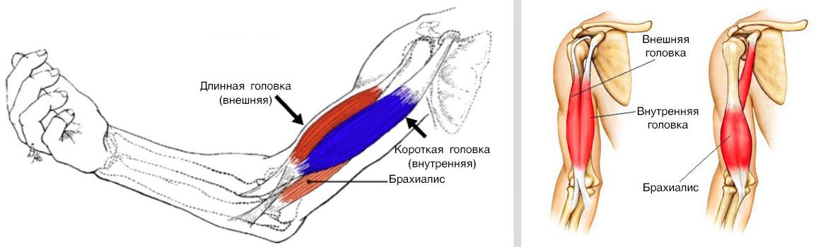 Тренировка бицепса и трицепса: тройной штурм | бомба тело