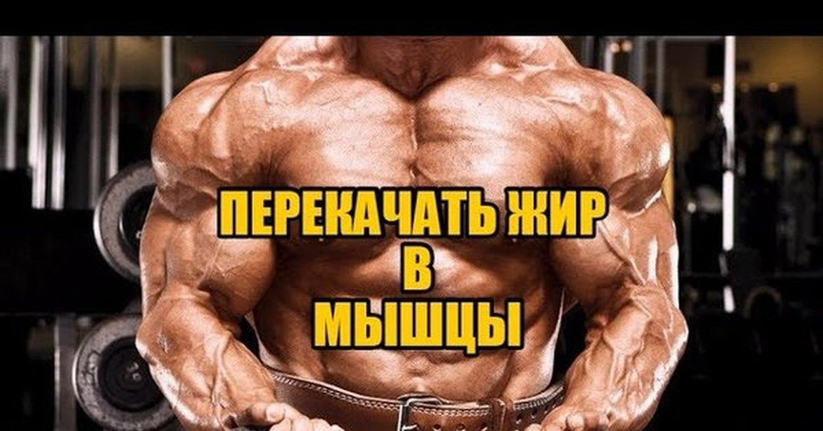 Похудение жир. как из жира сделать мышцы.энциклопедия тренажёрного зала. |