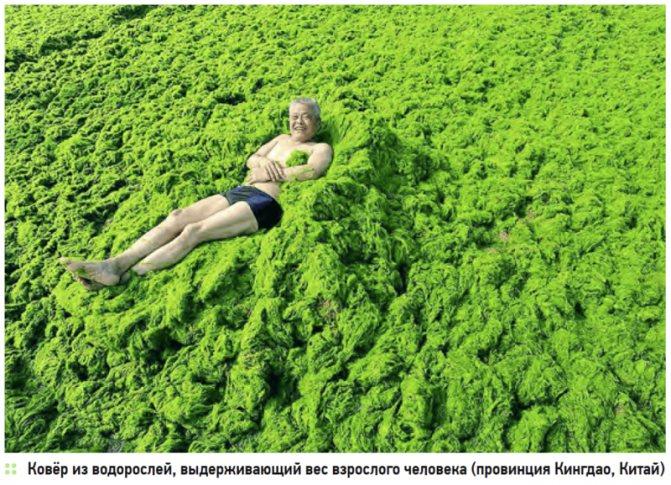 Питание водорослей: способ, пищевые цепи и типы
