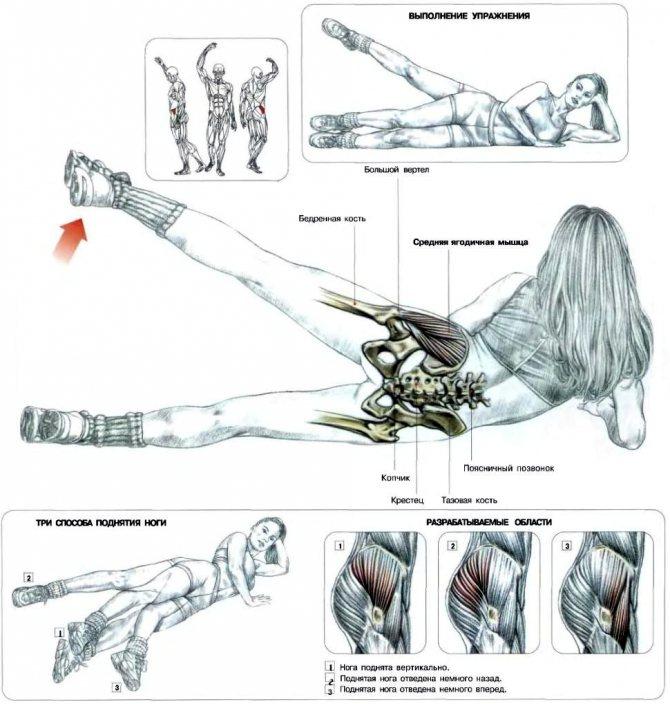 Махи ногами лежа: упражнение для ягодичных мышц, техника выполнения и практические рекомендации по выполнению махов ногами лежа