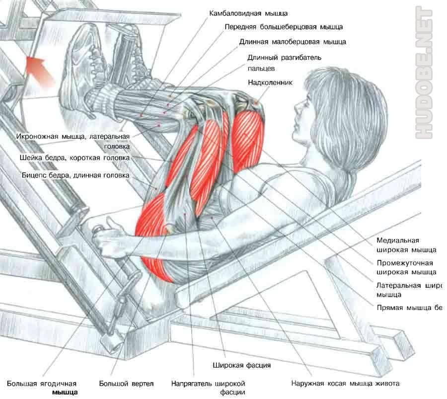 Упражнения с роликом для пресса: 9 упражнений для мужчин и женщин