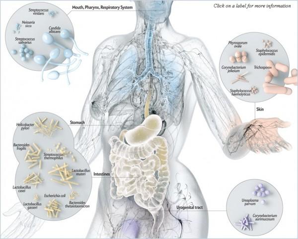 Микробиом кожи человека: почему повреждается и как восстановить