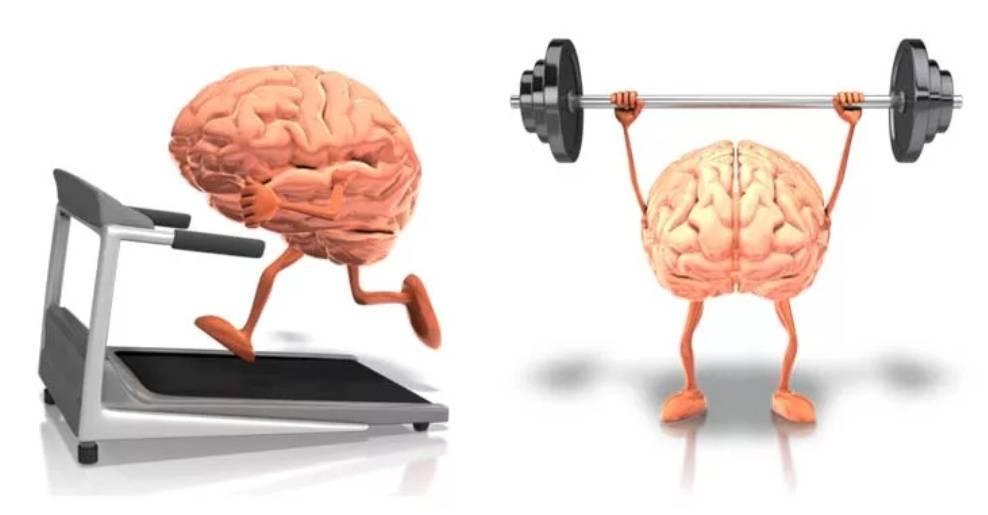 Как развивать мышечную память, виды мышечной памяти