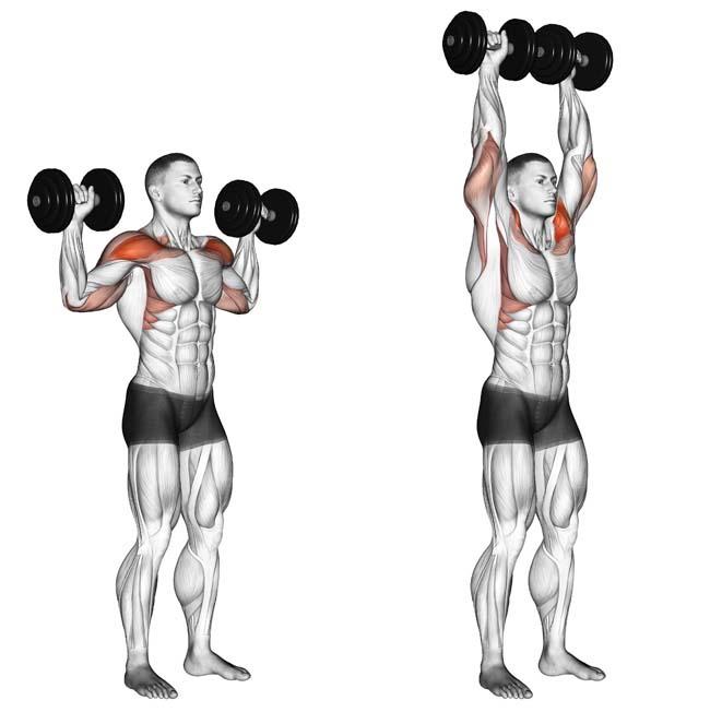 Упражнения для плеч с гантелями - лучший список