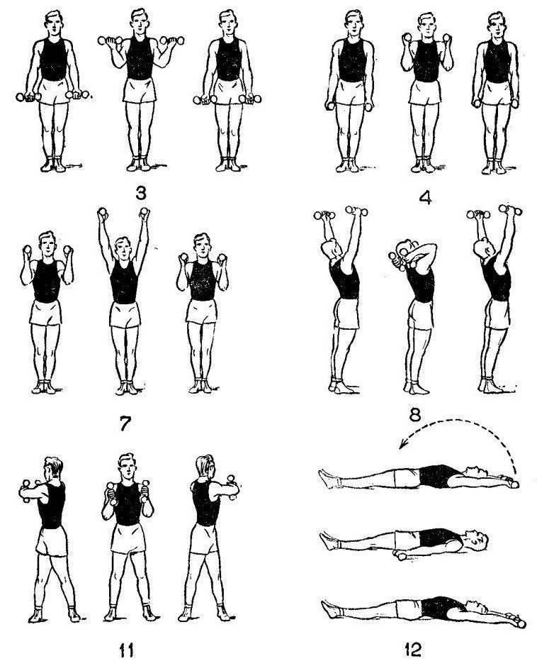 Домашние упражнения с гантелями для женщин