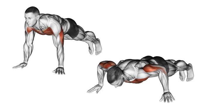 Отжимания на кулаках: техника выполнения, что дают и какие мышцы работают