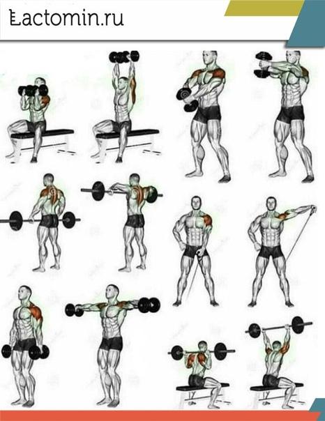 Упражнения на дельты: тренируем передние, средние и задние дельты