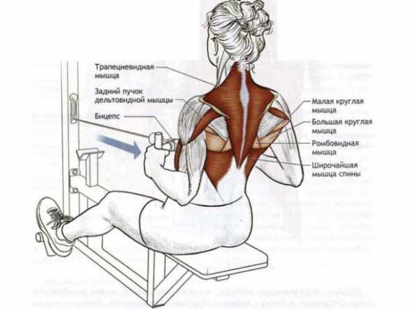 Тренировка спины