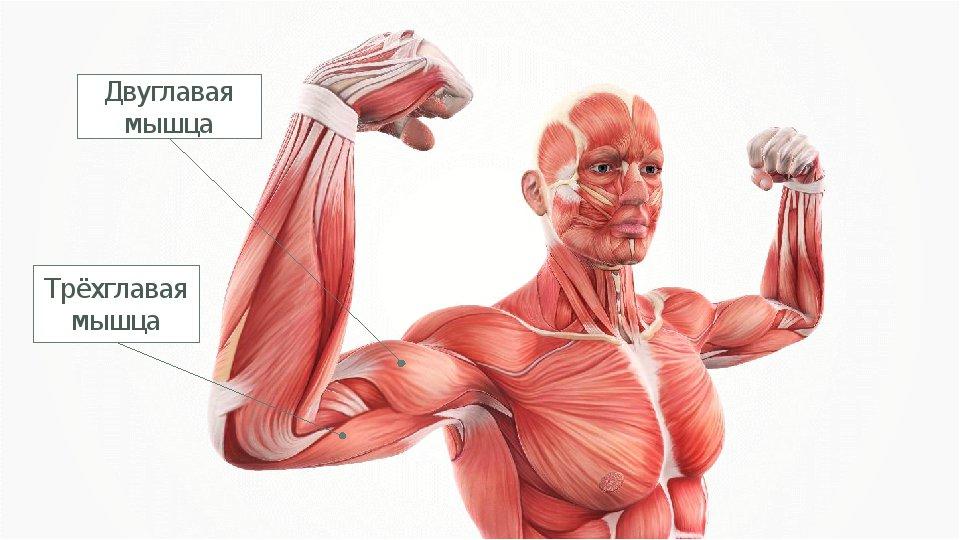 Причины потерь мышечной массы. как сжечь жир, не теряя мышечную массу