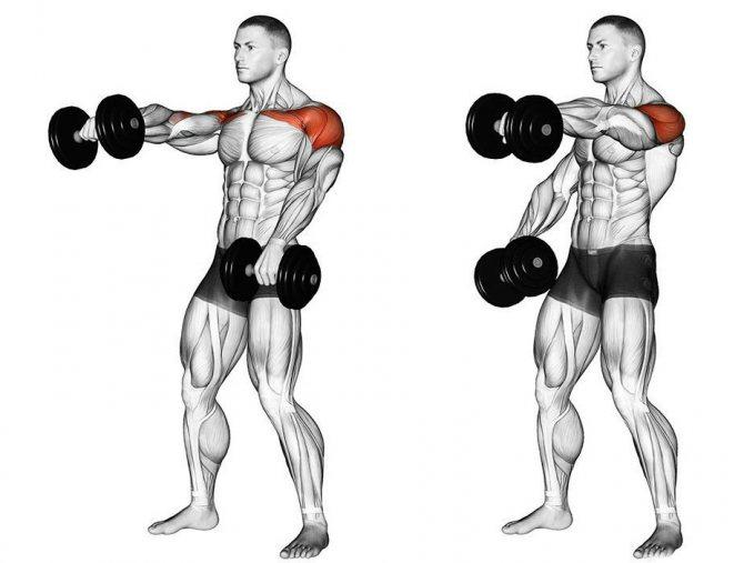 Техника выполнения упражнения шраги со штангой и гантелями | rulebody.ru — правила тела