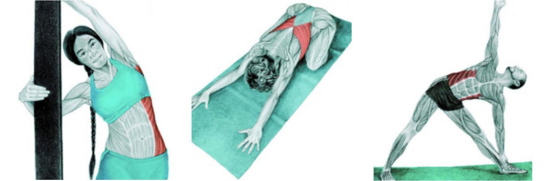 Растяжка мышц - советы и правила от профессионала  