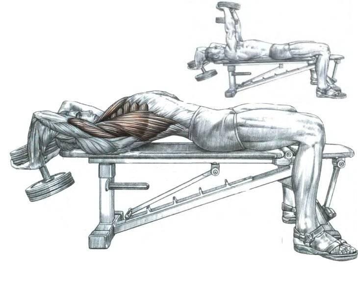 Тяга гантелей в наклоне: к поясу одной рукой с упором на скамье и стоя попеременно - техника выполнения для мужчин и девушек
