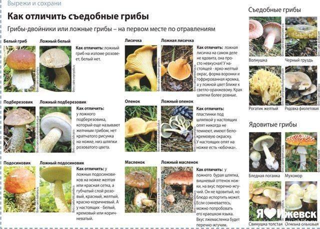 Сколько времени в желудке перевариваются грибы? healthislife.ru - все о здоровье