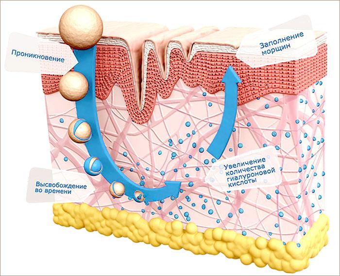 Гиалуроновая кислота — применение в косметологии и медицине | science debate