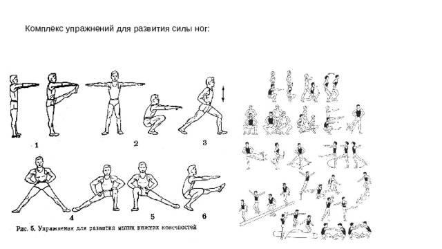 Комплекс упражнений для развития силы