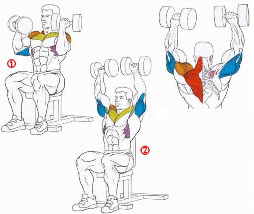 Жим гантелей сидя: правильная техника, нюансы и рекомендации | rulebody.ru — правила тела