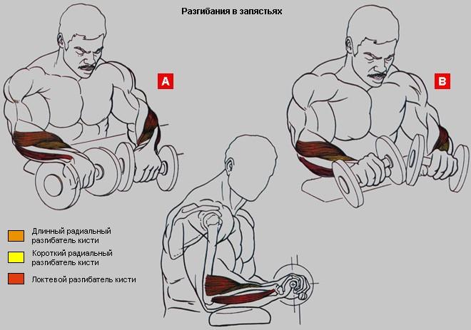 ✅ как увеличить размер запястья руки. как правильно качать кисти рук – простые и эффективные упражнения. выполняйте силовые упражнения - elpaso-antibar.ru