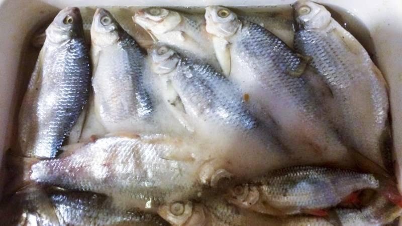 Как солить рыбу: особенности, виды соления, хранение