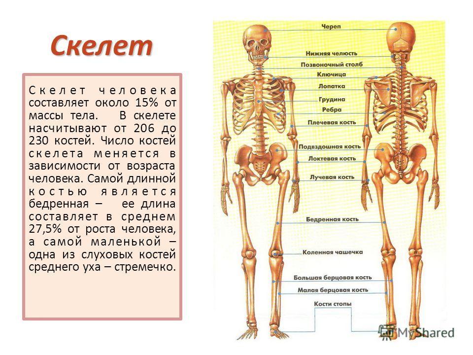 Тяжелая_кость_правда_или_миф