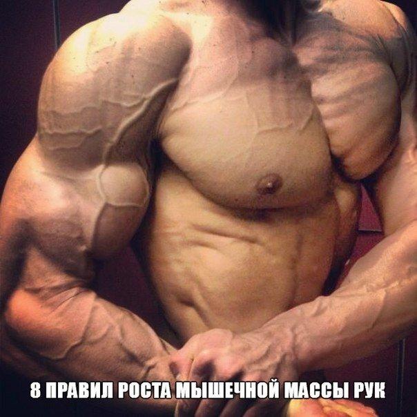 8 правил роста мышечной массы рук