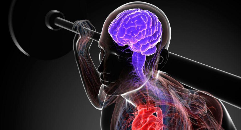 Ментальная связь мозг-мышцы: сверхэффективный тренинг в домашних условиях | для девушек и мужчин