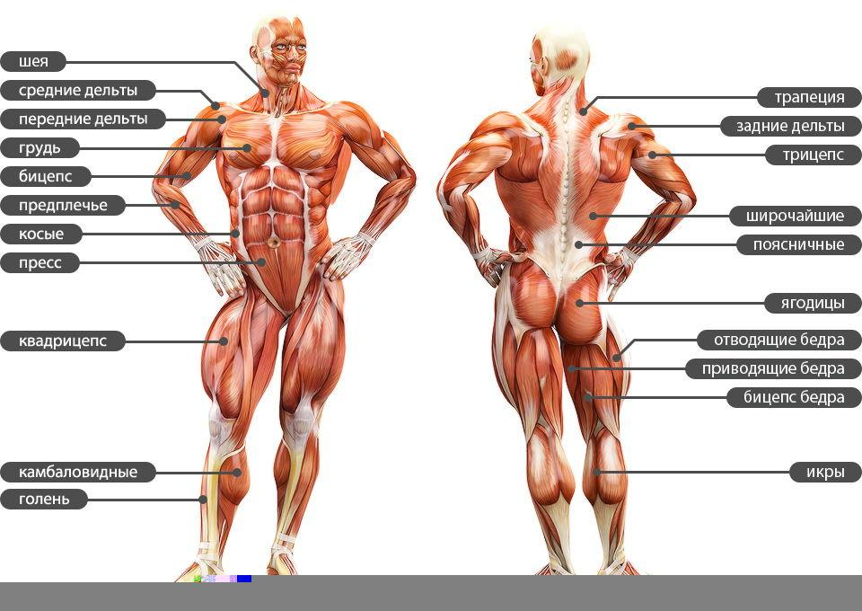 Перестали после тренировки болеть мышцы: причины, советы тренеров, отзывы - tony.ru