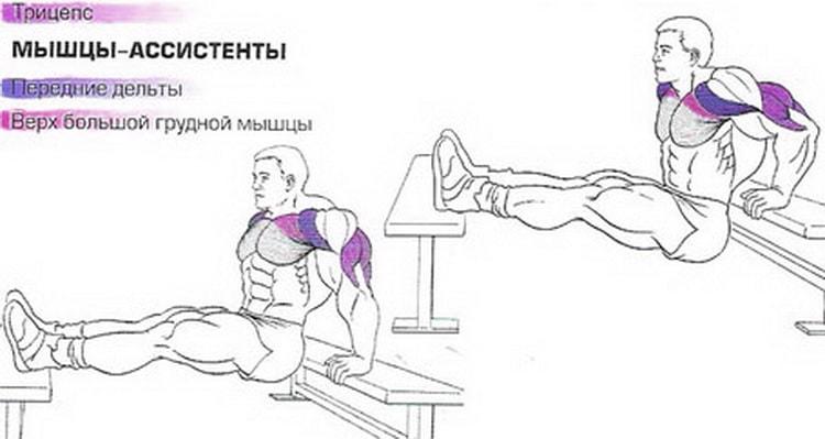 Обратные отжимания на трицепс: использование стула, скамьи, лавки или дивана